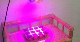 Taotrincs 12 Watt Pflanzenbeleuchtung Test